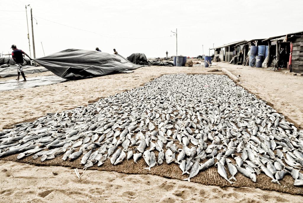 Sechage poissons